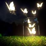 10 Frases que resumen el cortometraje El circo de la mariposa